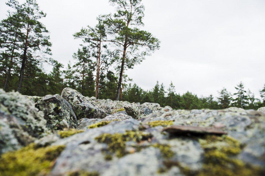 Sammallahdenmäen hautaröykkiö ja metsämaisemaa, kuva Rauman kaupunki